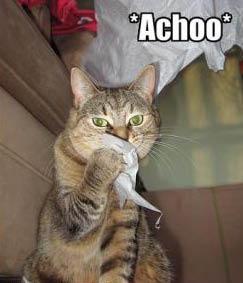 cat-sneeze